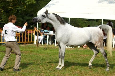 CC Dalia Pearl_Arabequus 2010