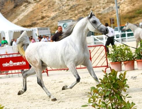 CC Dalia Pearl_Nacional 2010