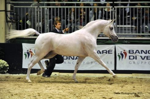 Esta Esplanan_2011 European Championship